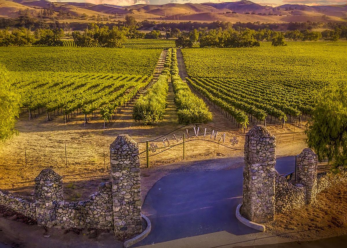 Виноградники Ливерморской долины