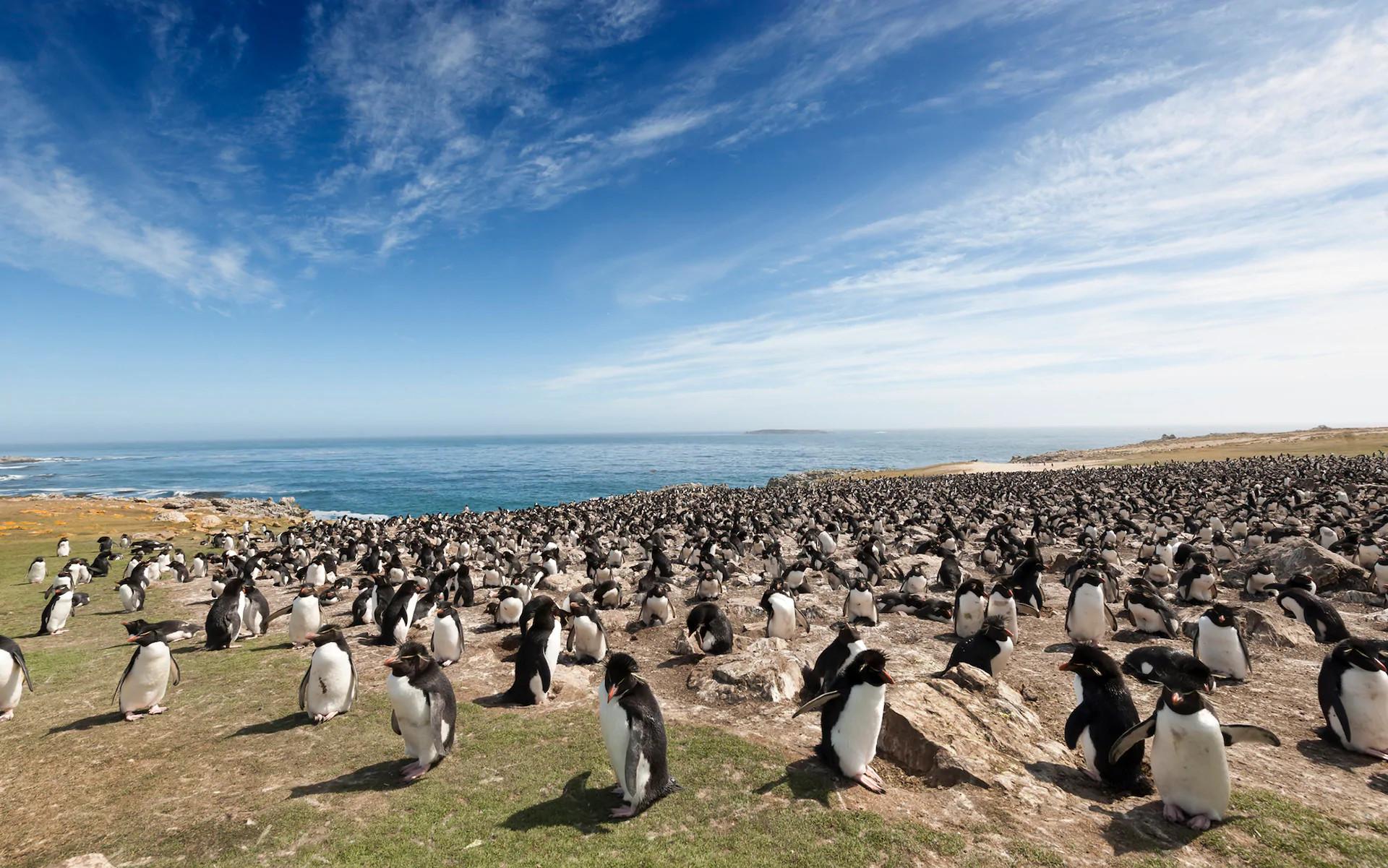 Фолклендские острова. Пингвины
